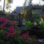giardino next paradise