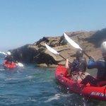 Sea kayaking on stable sit on tops.