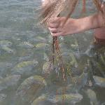 comida para os peixes
