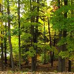 Durand Woods