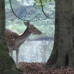 Een van de herten in het kasteelpark