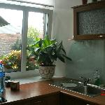 kitchen window, with plant