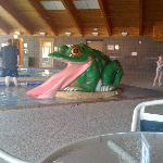 small frog water slide