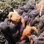 Attack of the Killer Starfish