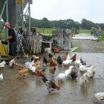 Feeding time for the chickens with Joe Rigney 2012