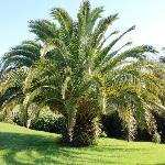 Palm Tree in Yard