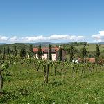 View from back of Podere