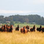 Drakensberg views and the beautiful horses
