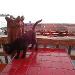 ひとなつっこい黒ネコ
