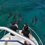 Dolphins join our boat everyday