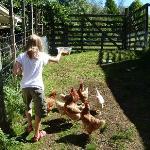 Feeding the hens at Mokoia Downs