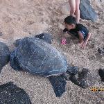 kids found turtle by the beach below the resort