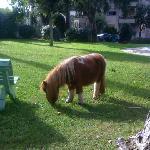 "la piccola Pony ""Bea"""