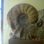 Ammonit Dinosaur Museum Blanding