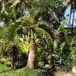 Tropical Garden of Mulawarman