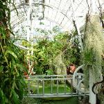 In the glasshouse