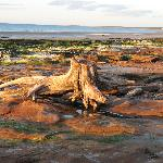 Driftwood on Nairn beach