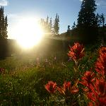Sunset and Wyoming Paintbrush