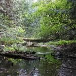 A creek just off the Killarney lake hiking trails