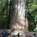 beautiful old growth