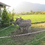Donkeys right outside :)