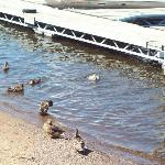 Ducks near the outdoor porch