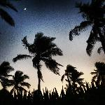Night sky - palms and half moon