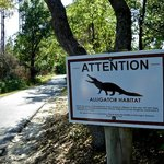 You might even encounter an alligator
