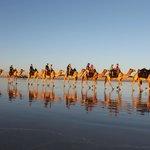 Camel Train Reflections