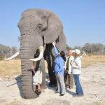 living with the elephants