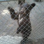 2012 baby bear at santas land