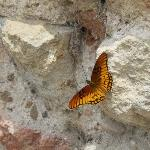 Lots of butterflies in La Recoleccion!