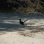 A roadrunner taking a break from 103º heat