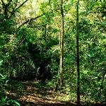 Werner Sauter Biological Reserve