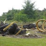 cimetiere de mamouths