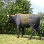 un auroch
