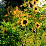 OPPD Arboretum Foto
