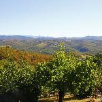 vue de la Capanna sur la campagne Toscane