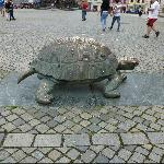 Turtle on Square