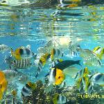 Escursione giardino dei coralli