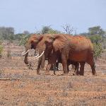 Tsavo Est Safari