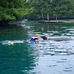 Friendly dophins taking us away
