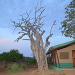 Photo of Sentrim Tsavo East