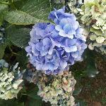 Unas flores preciosas