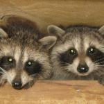 Residents of The Pa Wilds