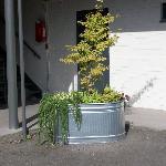 1st floor plant