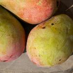 Sweet mangos for breakfast