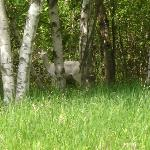 White deer in Father Hennepin State Park