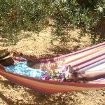 Le hammac dans le jardin d'olivier