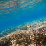 The reef at your doorstep. Do yourself a favour & buy a Duty Free underwater camera at the airpo